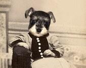 Skippy - Vintage Schnauzer 5x7 Print - Anthropomorphic - Puppy Print - Altered Photo - Photo Collage - Whimsical Art Print - Unusual Gift