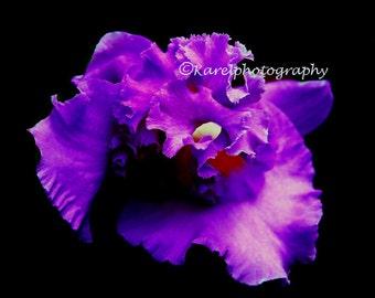 Elegant Purple Floating Orchid Wall Art