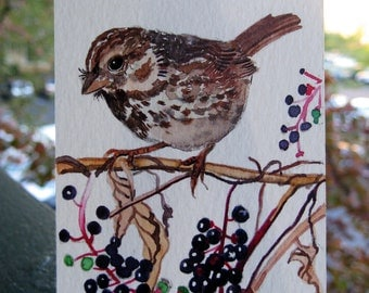 ACEO Limited Edition 2/25-  Bird on pokeweed vine, in watercolor