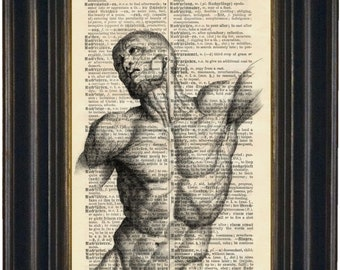 Anatomy Print - Full Torso with Muscles Print on vintage  upcycled German English Dictionary Page
