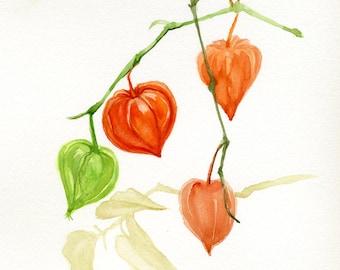 Fall flowers, Chinese lantern, Bladder cherry, orange watercolor original painting, Winter cherry, botanical illustration