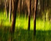 TreeFlow