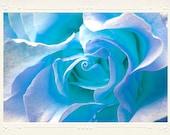 Cool Aqua Blue Rose Macro Close-up handmade photo note card