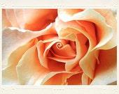 Warm Peach Pink Rose Macro Closeup handmade photo note card