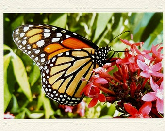 Monarch Butterfly in the Garden handmade photo note card