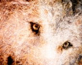 Wolf Photograph - Wildlife Home Decor - Textured Wolf Wall Art - Fine Art Animal Photography Print