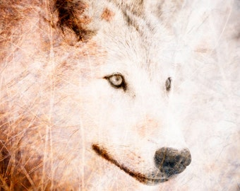 Wolf Fine Art Wall Decor Photo - Textured Wildlife Art Home Decor - Color Animal Photography