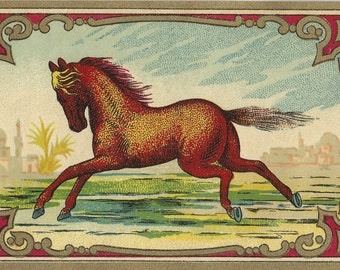 Moroccan Red - Vintage 1930s Cantering Chestnut Horse Art Chromolithographic Packaging Label