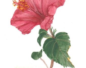 Red Hybiscus Original Watercolor 810 by Wanda's Watercolors