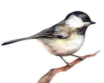 Print of Original Painting, Bird Watercolor Illustration, Chickadee, Fine Art by Barbara Szepesi Szucs