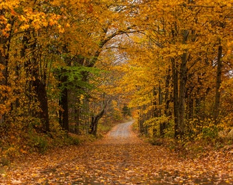 Vermont Backroads -  Nature photography, landscape photography, fall, autumn, fine art print, leaves, new england