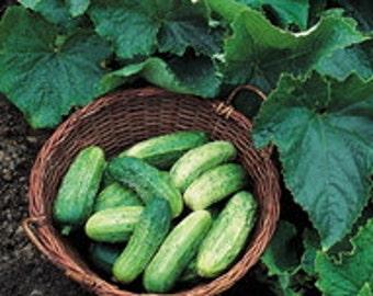 Cucumber Seeds - Bush Pickle