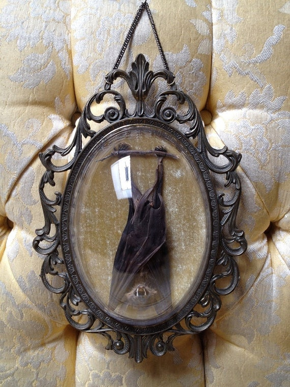 Sleeping Taxidermy Bat in Vintage Ornate Metal Frame