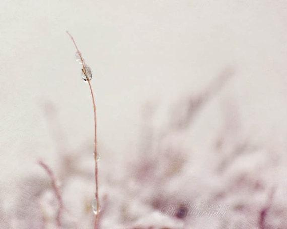 Ice Drop 8x10 Winter Nature Photography - Winter Wall Art - Fine Art Photo
