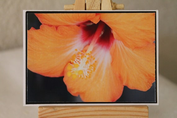 ACEO, photograph, hibiscus, orange, tropical, flower
