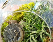 Fairy Moon and Air Plant Moss Terrarium - A Unique Birthday or Mothers Day Gift - Charm is INCLUDED
