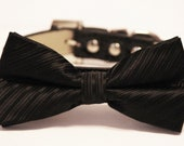 Black dog bow tie, bow attached to dog collar, pet wedding accessory, dog lovers, Wedding dog collar, Black bow tie