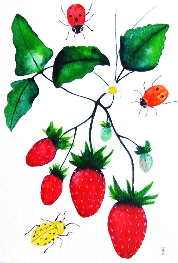 Strawberries Ladybugs Fruits Insects Original Painting Watercolor Ink Drawing Red Green Kitchen Decor Contemporary Art Fruits Animal Art
