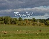 Te Sheep Farm in the Beautiful Berkshires