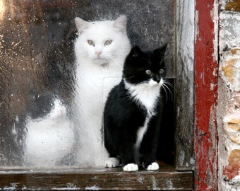 Kittens, Barn, Window, Winter, Rustic, Photography, Fine Art, Red, Black, White, Wisconsin