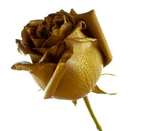 Golden Rose Digital Download Photography gold and white rose wall art flower decor