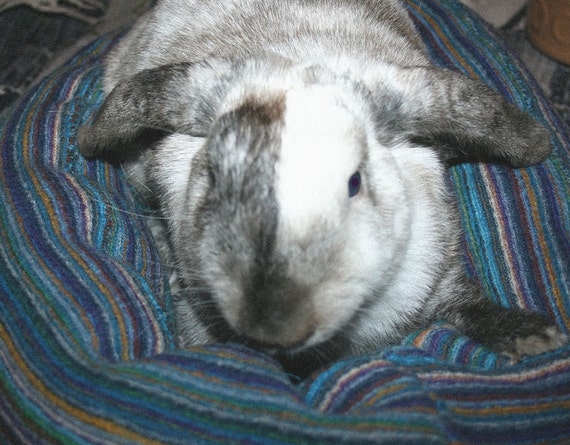 Ugli Donut bunny bed for small sized bunny finely woven wool in rich blues