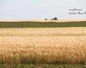 Art Photography of wheat field on Prince Edward Island, Canada, agriculture scene, farm