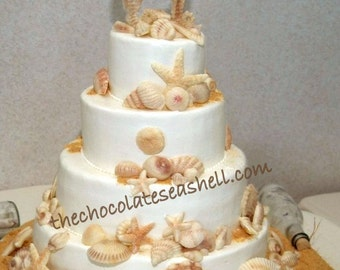 Monterey Bay 75 collection of 75 white chocolate seashells