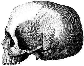 Wall chart, Human skull, Medical cabinet, 31