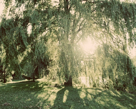 Weeping Willow Photograph - The Sun Brings a Smile to a Weeping Face - 8x10 Print - Fine Art Photography - Rich Green and Peachy Hues