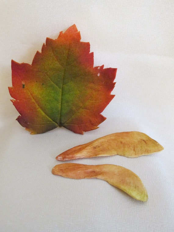 Cake Decorating Leaves : Items similar to sugar edible leaves gumpaste fall colored ...