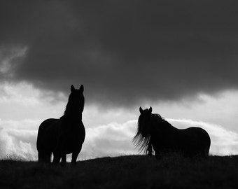 Black and white horse photo, fine art photo, animal photography, horse silhouette, fell pony, various sizes