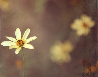 yellow jewels floral flower fine art photography summer warm neutral colors dreamy