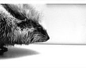 Animal Bodies B&W - Set of 3 - 5x7 - Surreal Fine Art Photograph - Black Friday Etsy Cyber Monday Giraffe Porcupine Jellyfish