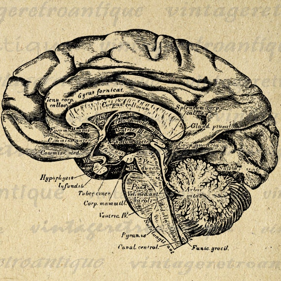Brain Diagram Vintage Download Wiring Diagrams