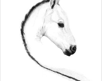 White on White Foal