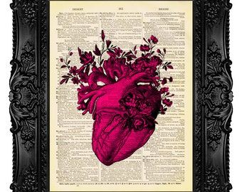 ANATOMICAL HEART illustration with vintage roses art print on old book page dictionary print love human heart PINK 57