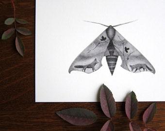 Sphinx Moth + Foxes - 5x7 print