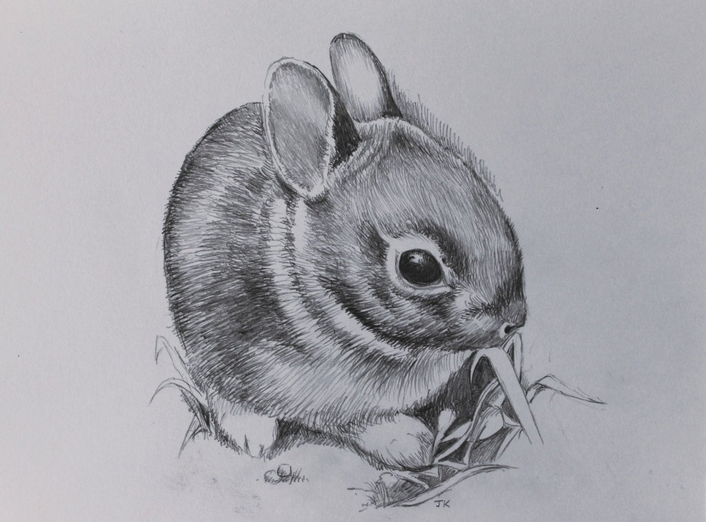cute baby rabbit original hand drawn pencil artwork