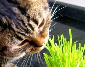 Kitty Cat Pet Garden Kit - Galvanized Tin Bucket Planter - DIY Mini Garden Kit for Pets