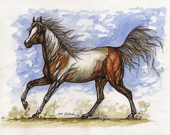 the pinto  horse watercolor painting