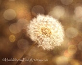 Golden Dandelion Photograph, Dreamy Whimsical Nature Photography, Amber Brown Earth Tones Photo Autumn 8 x 10 Home Decor Wall Fine Art Print - HuckleberryFineArt