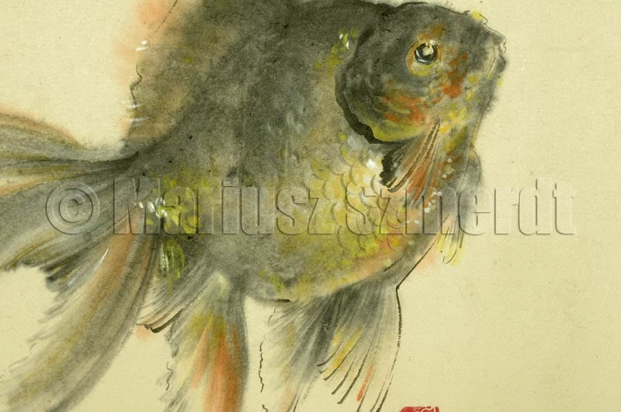 Vendita pesci rossi koi pesce pittura giapponese cinese for Vendita koi