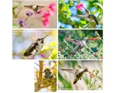 nature card, hummingbird photo cards, wildlife photo, nature photography, 4x6 art print,