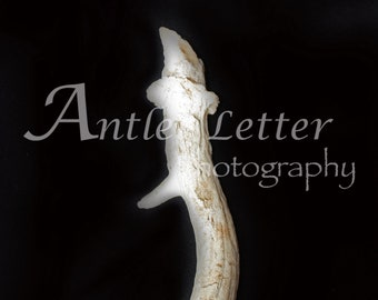 SALE-Letter I, Antler, Whitetail Buck Shed, Photography, Alphabet, Hunting