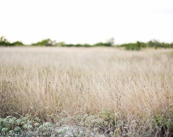 Beach Grass Fine Art Photography Print - Nature Photography