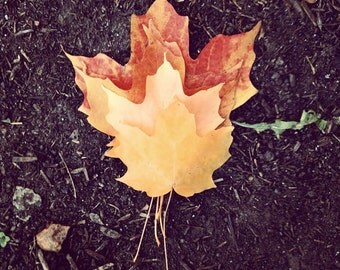 Nature Photography, Fall Leaves Photograph, Small Print, Autumn Photo, Autumnal Colors, Home Decor, Deep Brown Orange yellow