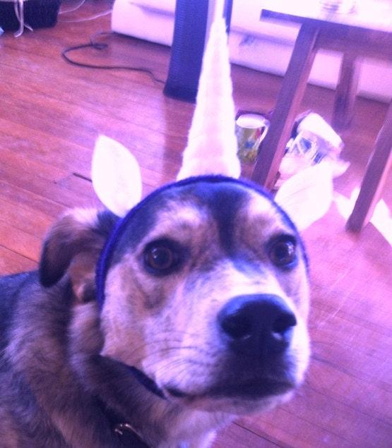 Headbands Unicorn