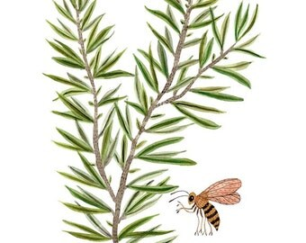 Rosemary Sprig Print, botanicals, herbs, giclee print, reproduction watercolor
