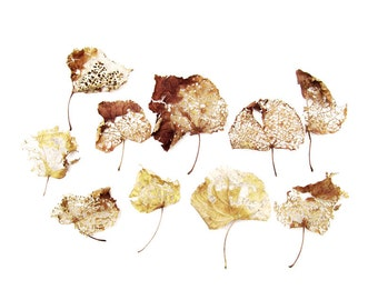 Autumn Leaves Nature's Lace Still Life Natural History Photography Yellow Brown Fall